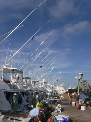 Pirate's Cove Marina, Released Marlins!