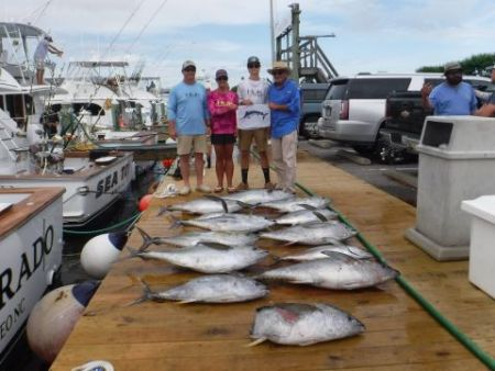 Pirate's Cove Marina, Lots of meat fish and Blue Marlin Release....