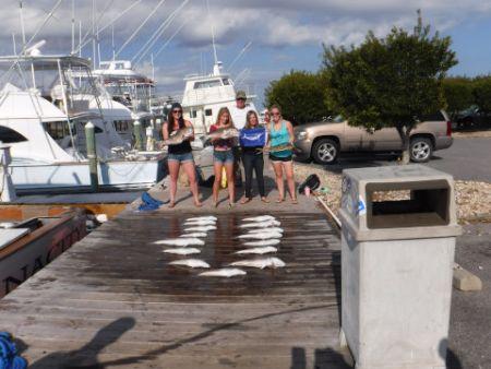 Pirate's Cove Marina, Variety Pack