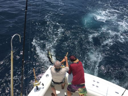 T-Time Charters, Sharks are most of our tunas