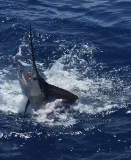 Bite Me Sportfishing Charters, August 15th Report
