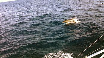 Tuna Duck Sportfishing, Mahi and Friend