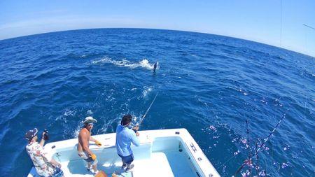 Tuna Duck Sportfishing, Sailfish Release For Aki