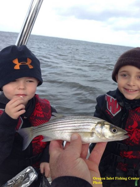 TW's Bait & Tackle, TW's Daily fishing Report. 12/30/15