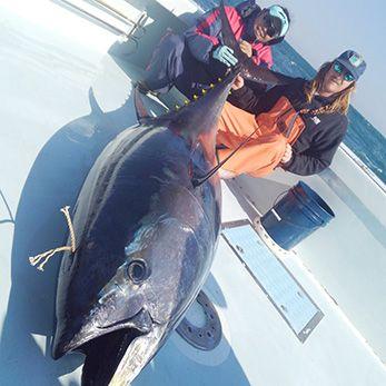 Tuna Duck Sportfishing, Trophy Bluefin