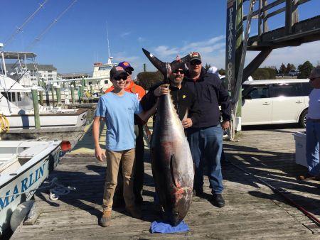 Pirate's Cove Marina, Bluefin Tuna!