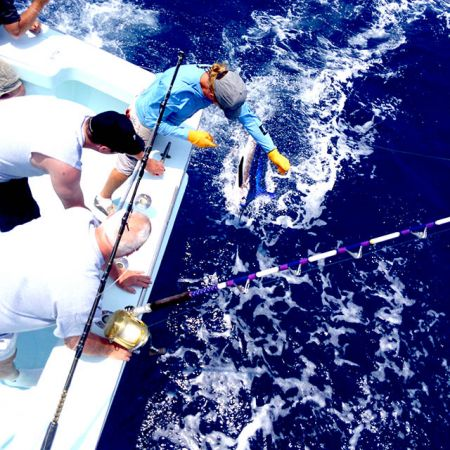 Tuna Duck Sportfishing, Dolphin and White Marlin