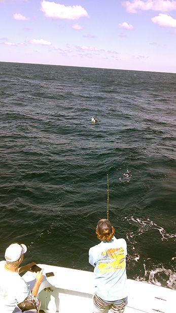 Tuna Duck Sportfishing, White Marlin Release and Mahi!