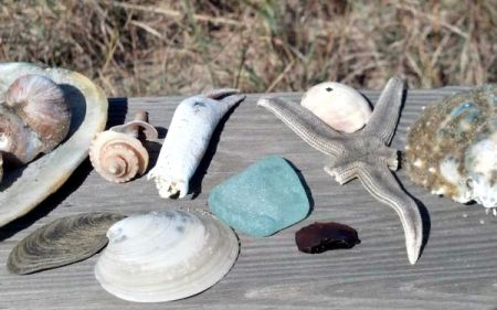 Graveyard of the Atlantic Museum, Salty Dawgs Lecture Series: Beachcombing Biology: The Stories