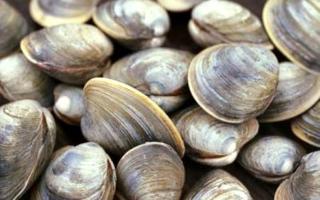 Graveyard of the Atlantic Museum, Salty Dawgs Lecture Series: Cooking Clams Outer Banks Style