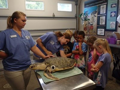 North Carolina Aquarium on Roanoke Island, Sea Turtle Hatchling Summer Camp