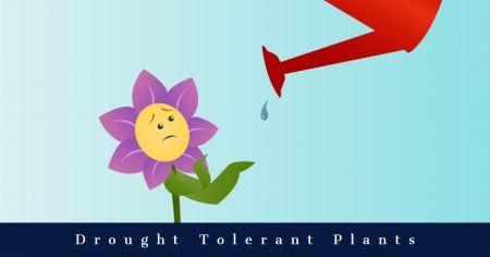 Dare Master Gardener Association, Library Garden Series 2021: Drought Tolerant Plants