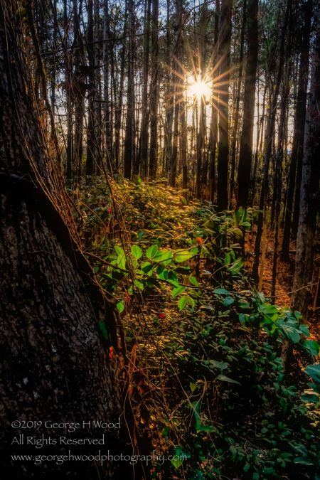 Dare County Arts Council, The Life of Trees Among Us Exhibit