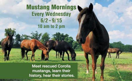 Corolla Wild Horse Museum, Mustang Mornings