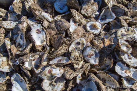 Stumpy Point Oyster Feast, Stumpy Point Oyster Feast