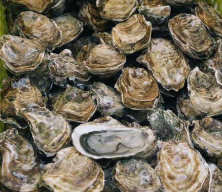 Taste of the Beach, *Canceled* Oinking Oysters – Beer and Bourbon BBQ & Oyster Pairing at Shipwrecks
