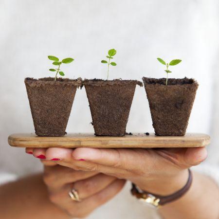 Dare Master Gardener Association, Library Garden Series - DIY Irrigation for Container Gardening