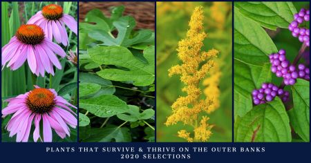 Dare Master Gardener Association, Library Garden Series 2021: Plants That Survive & Thrive on the OBX