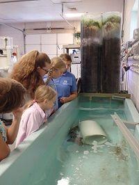 North Carolina Aquarium on Roanoke Island, *VIRTUAL* Quarantine Tour