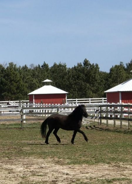 Corolla Wild Horse Museum, Member Mornings on the Rescue Farm