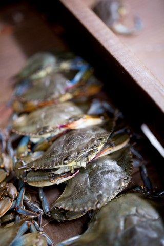 Basnight's Lone Cedar Outer Banks Seafood Restaurant, Fresh Jumbo Crab Stuffed Softshell Crabs
