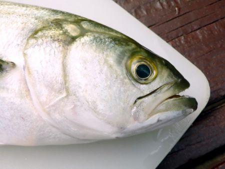 Seaside Farm Market Corolla, Fish