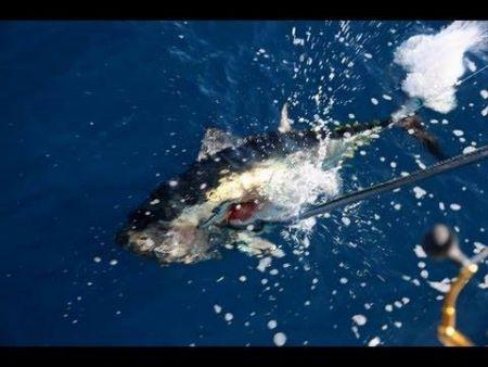 Hitman Sportfishing, Offshore Trip with Captain James