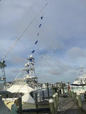 A-Salt Weapon Charters, Tournament Fishing