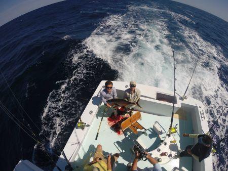 Reliance Hatteras Fishing Charters, Shark Fishing