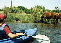 Back Country Wild Horse Safari, Kayak Corolla