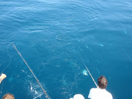 Gecko Sportfishing, Half Day Inshore Fishing on the Drumrunner
