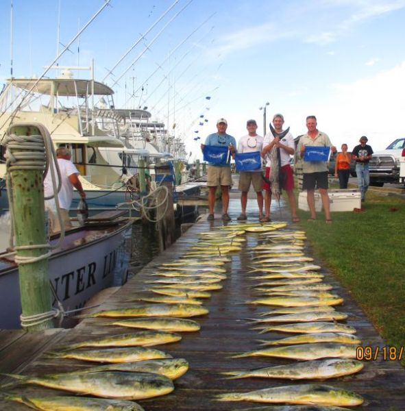 Limits of yellow fin tuna limits of dolphin and billfish for Oregon inlet fishing charters