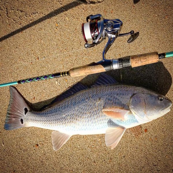 Daily fishing report february 16 2018 tw s bait for Tw s fishing report