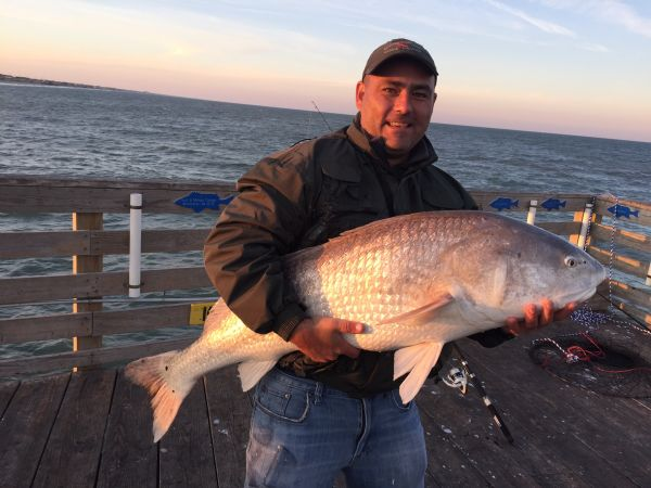 Corolla fish report november 12 2016 obx bait and for Obx fishing reports