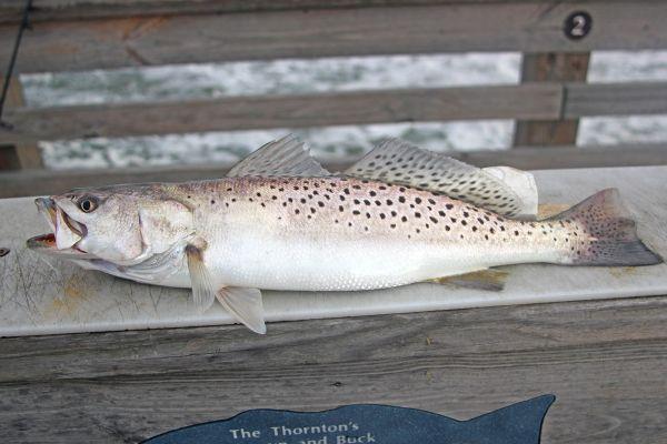 Jennette 39 s pier fishing report november 28 2017 for Jennette s pier fishing report