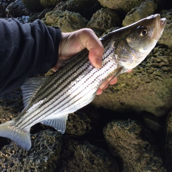 Daily fishing report december 12 2017 tw s bait for Tw s fishing report