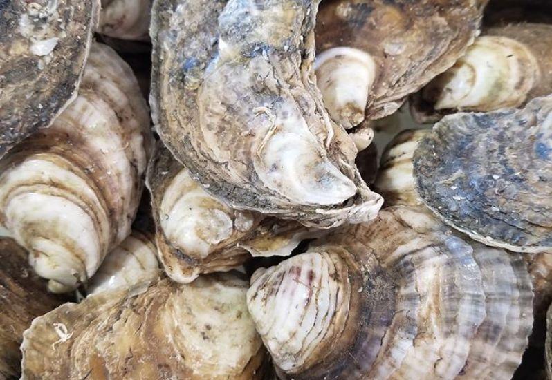Whalebone Seafood Market Nags Head NC